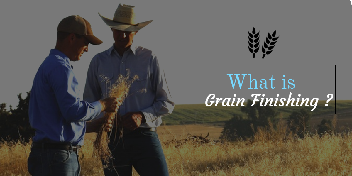 What is Grain Finishing?