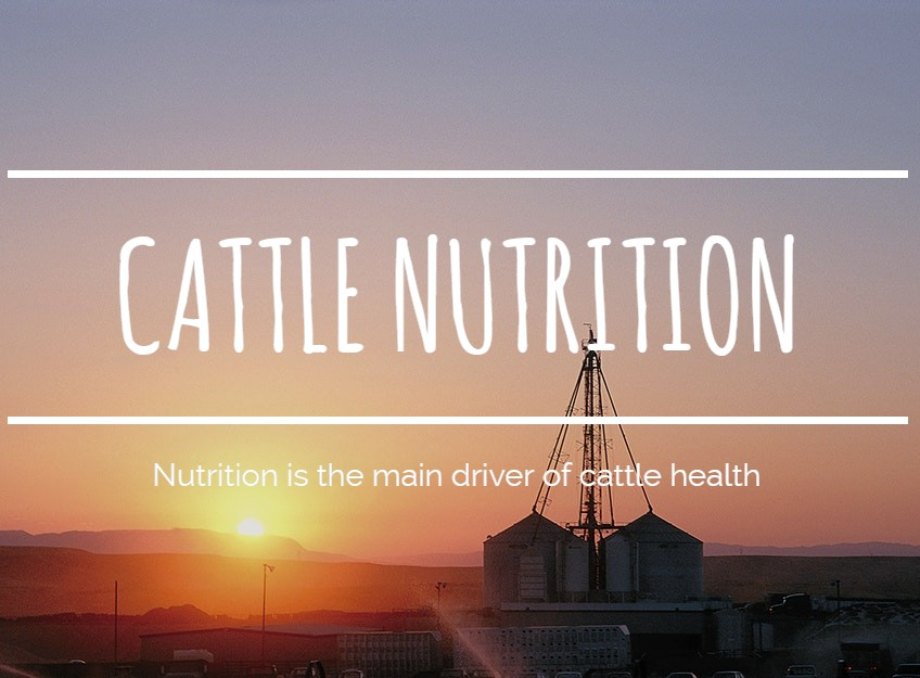 Cattle Nutrition