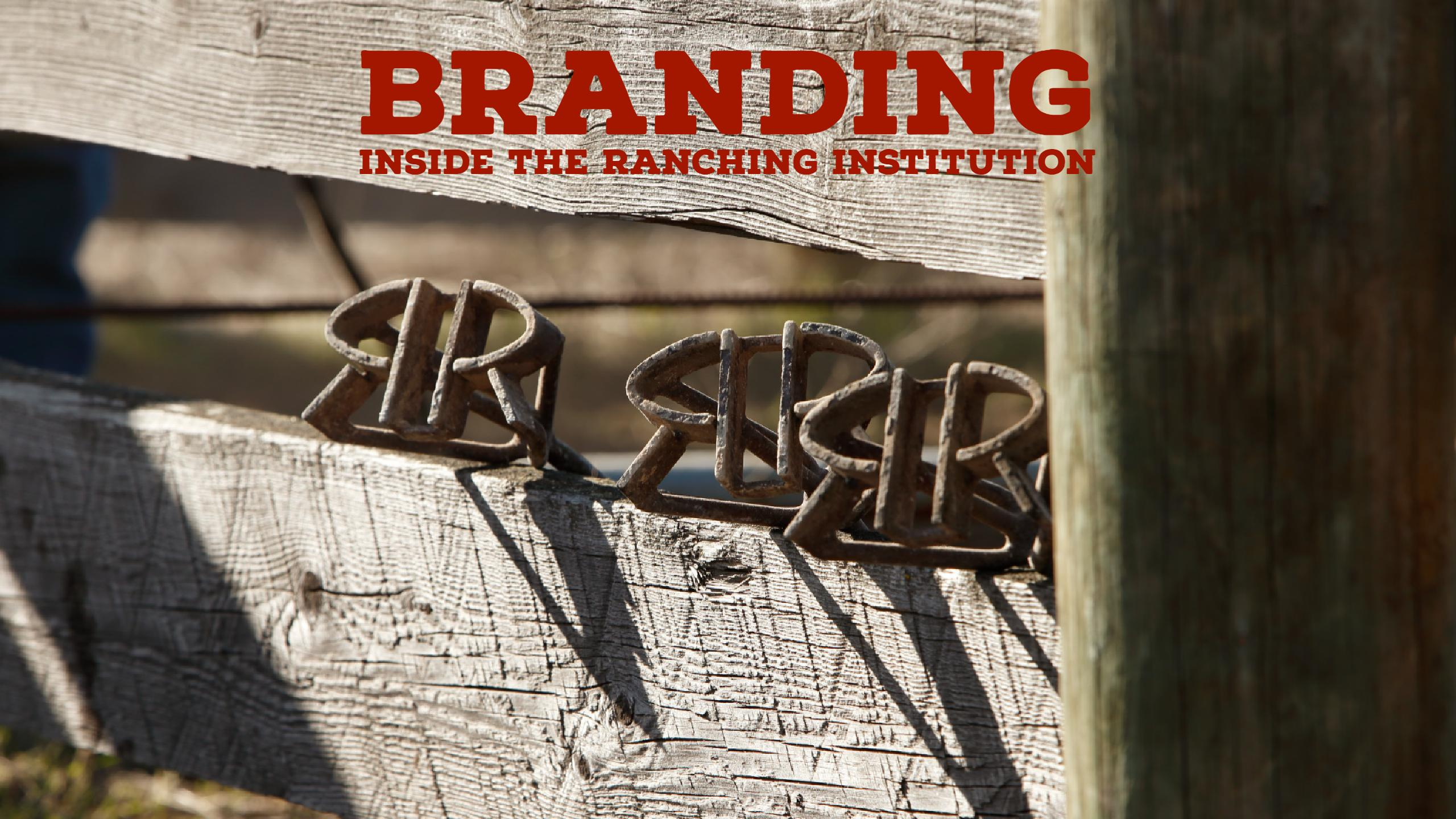 Learn the Hows and Whys Behind Branding Cattle