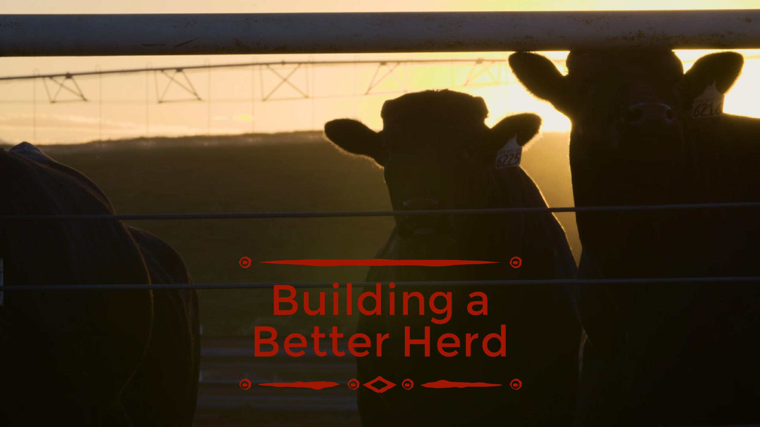 How We Improve Beef Quality Through Every Generation