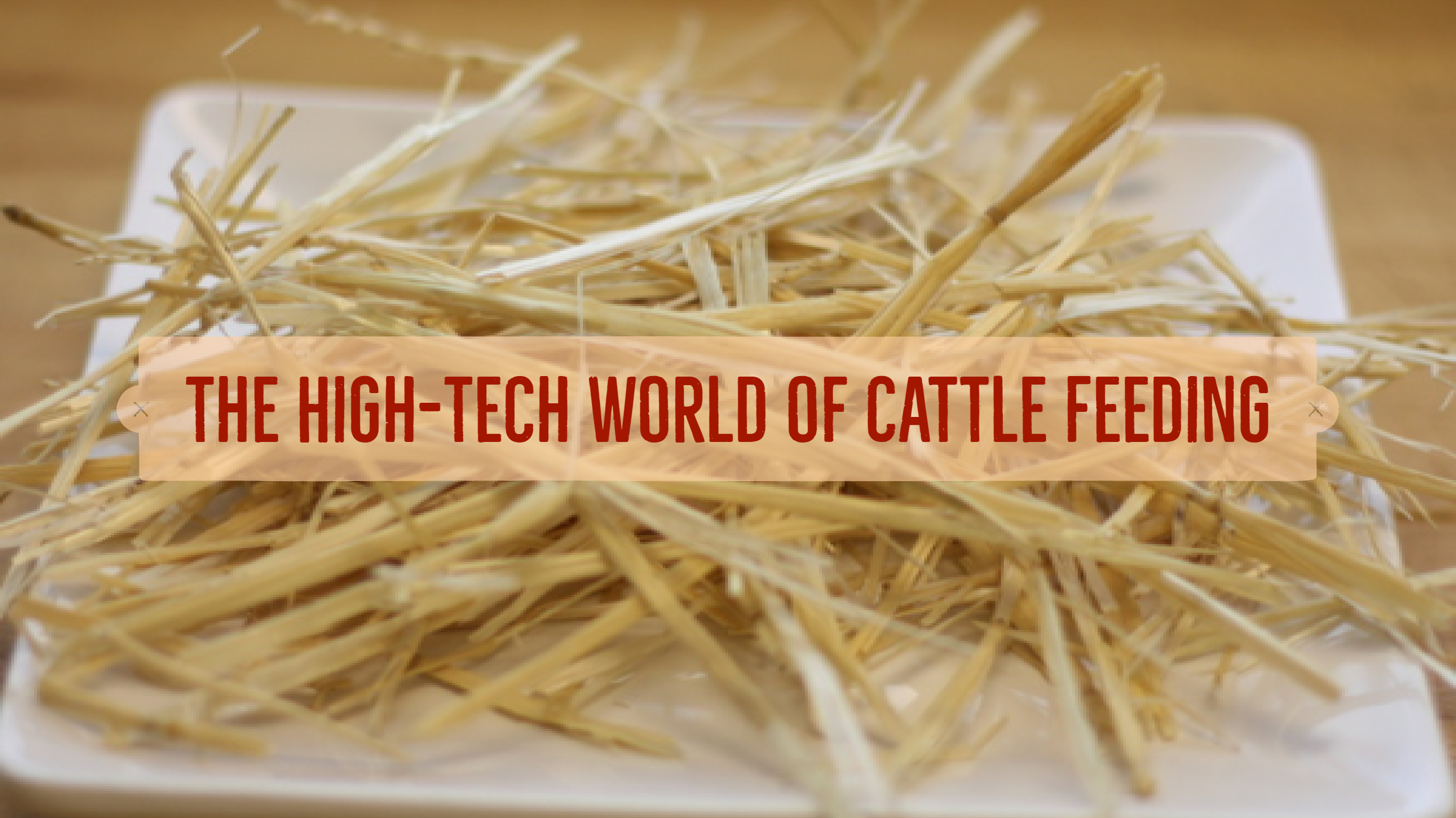 Improving Cattle Care Through Technology